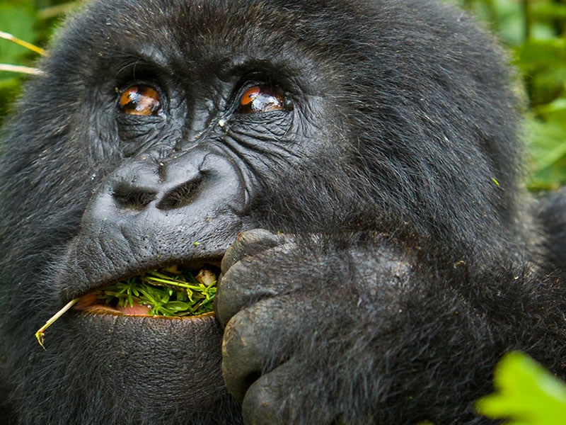 Rwanda Primates tour