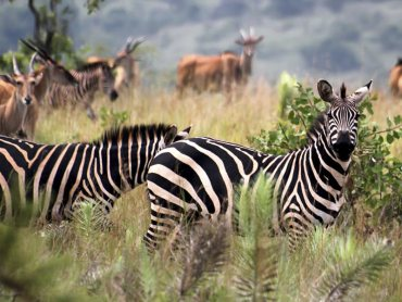 6 Days Rwanda safari tour