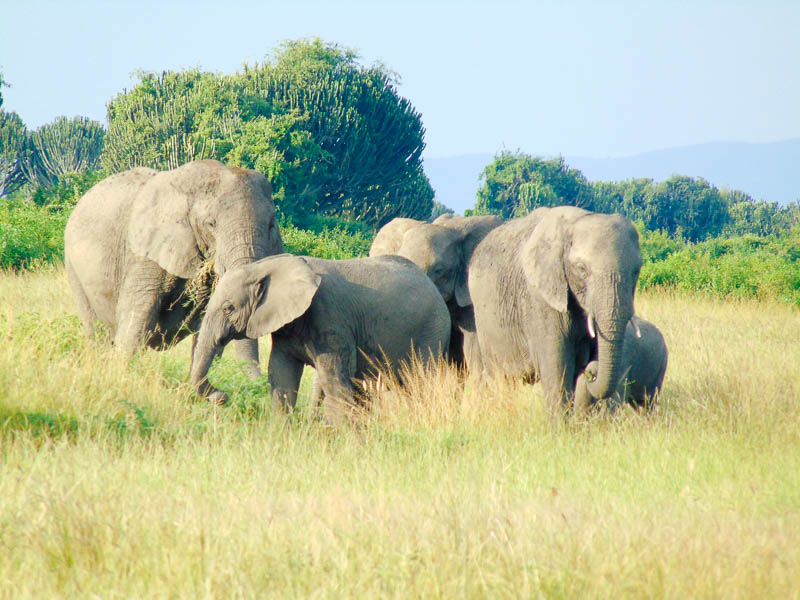 8 DAYS RWANDA WILDLIFE SAFARI (2)