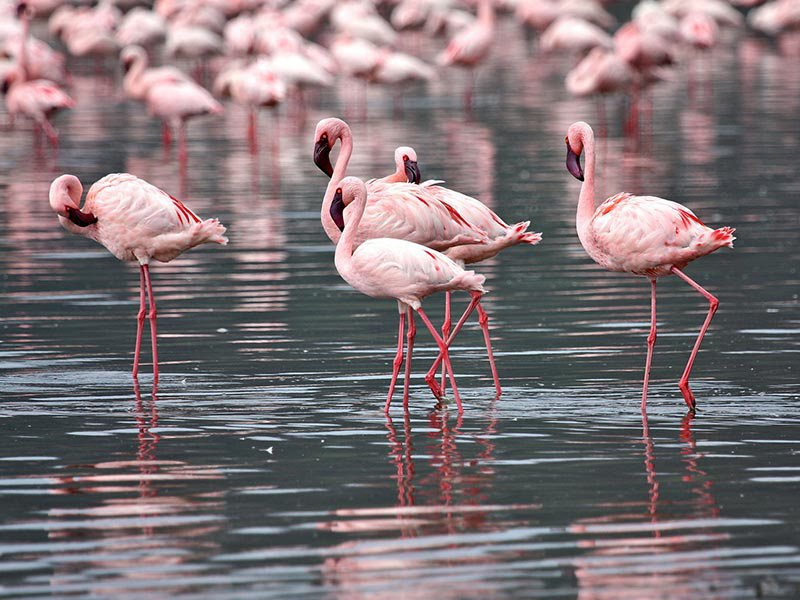 4 Days Bird Watching safari (1)
