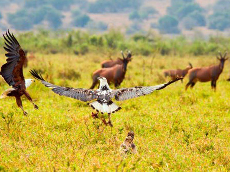 4 Days Bird Watching safari (2)