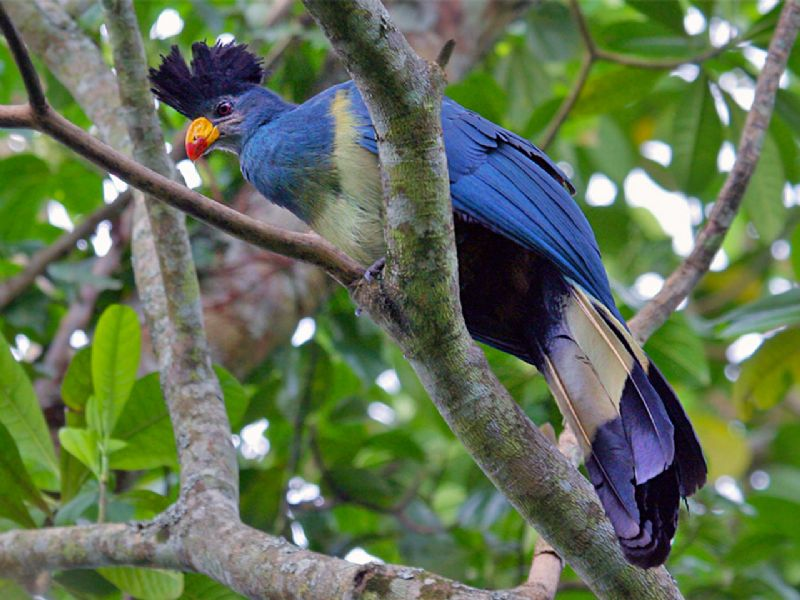 4 Days Bird Watching safari (3)