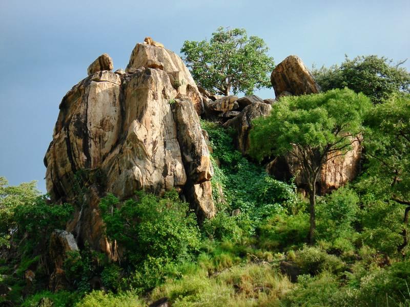 Mount Elgon National Park vegetation
