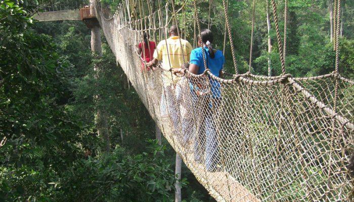 Nyungwe forest