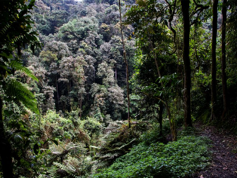 Nyungwe Forest National Park