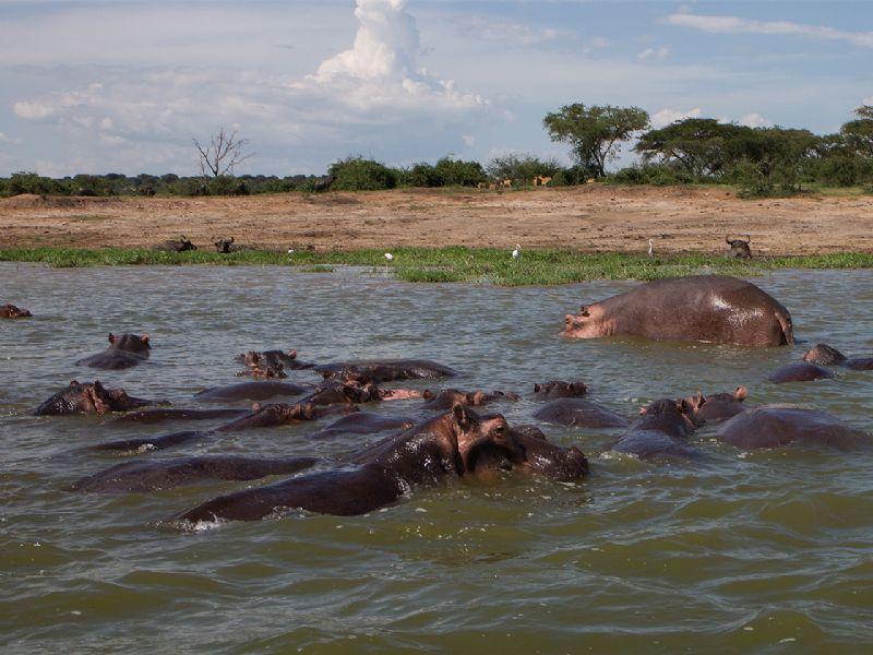 UGANDA – RWANDA SAFARI 15 DAYS SAFARI (4)