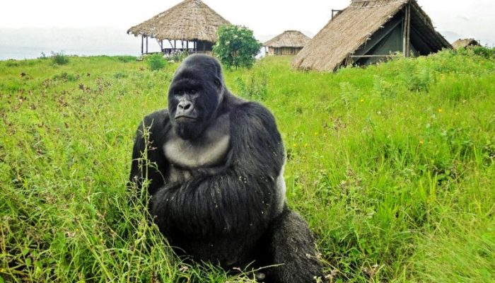 virunga national park (1)