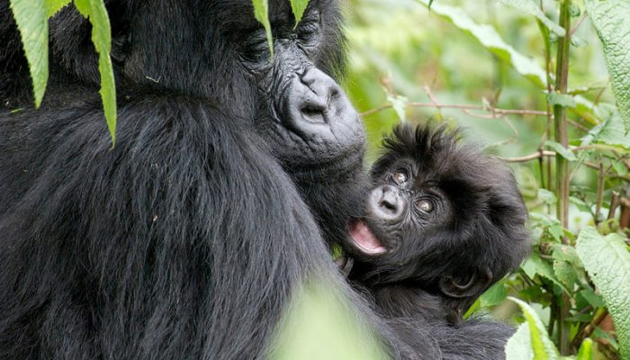 virunga national park (3)