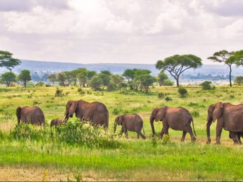 best-serengeti-and-ngorongoro-crater-tour-2-12656_0-800x600