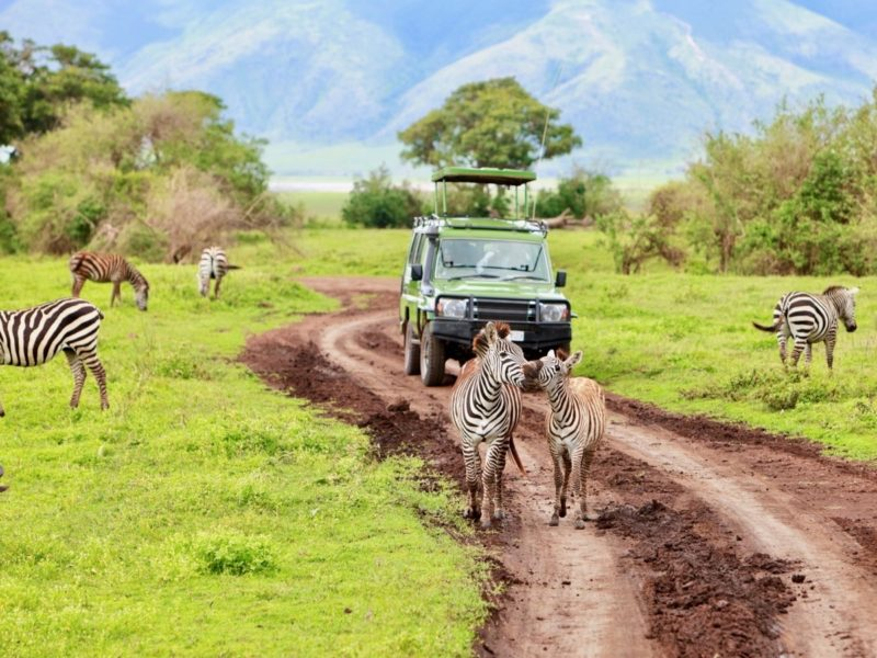 game drive in Ngorongoro Conservation Area
