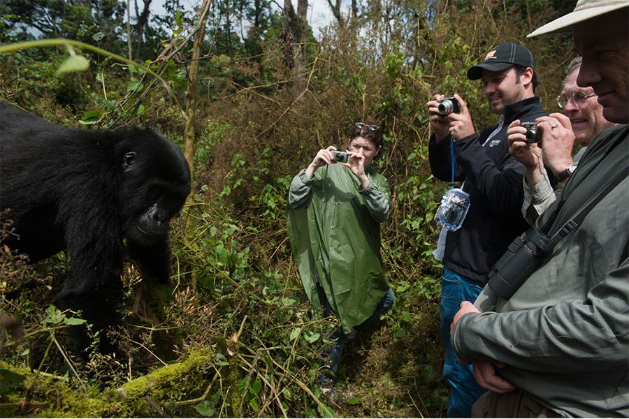 Full Day Gorilla Trekking Safari